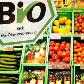 Bio-Logo & Gemüse
